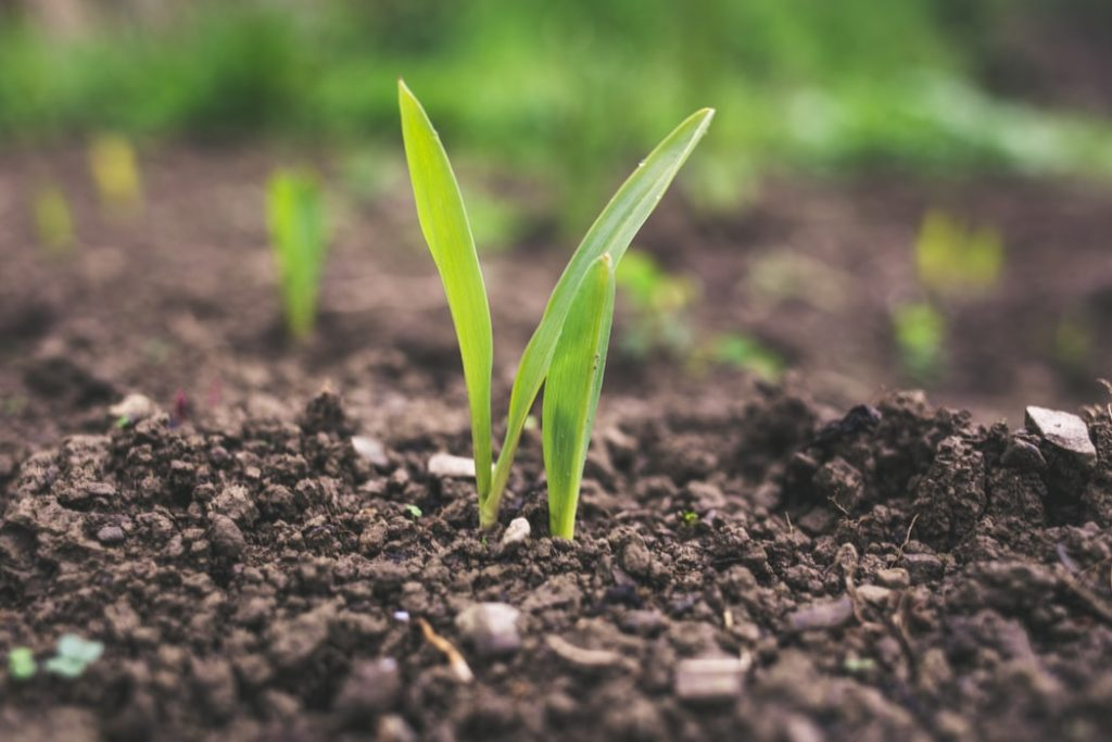 La agricultura, como sumidero de carbono para mitigar el cambio climático