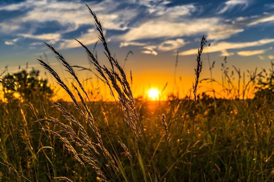 Biodiversidad y soberanía alimentaria