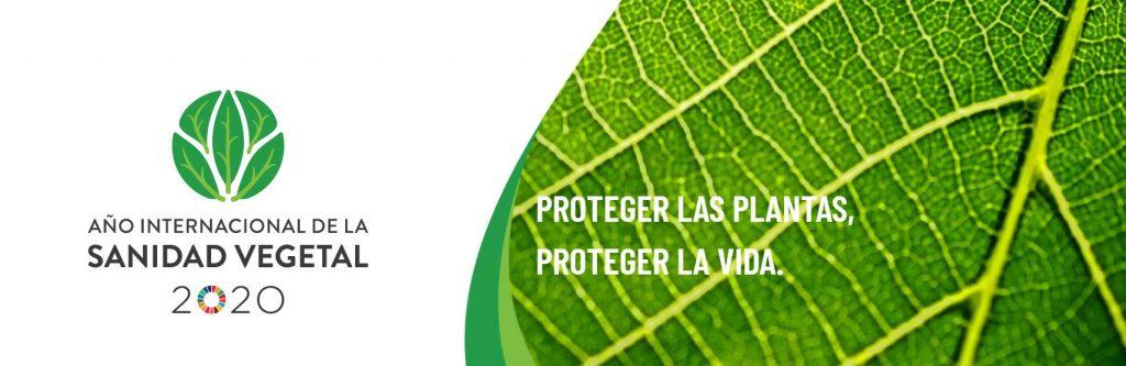 2020 es el año internacional de la sanidad vegetal