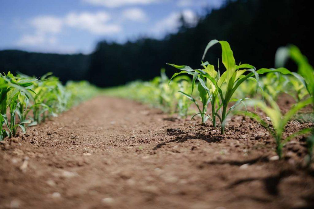La propiedad intelectual de las semillas, a debate en la UE