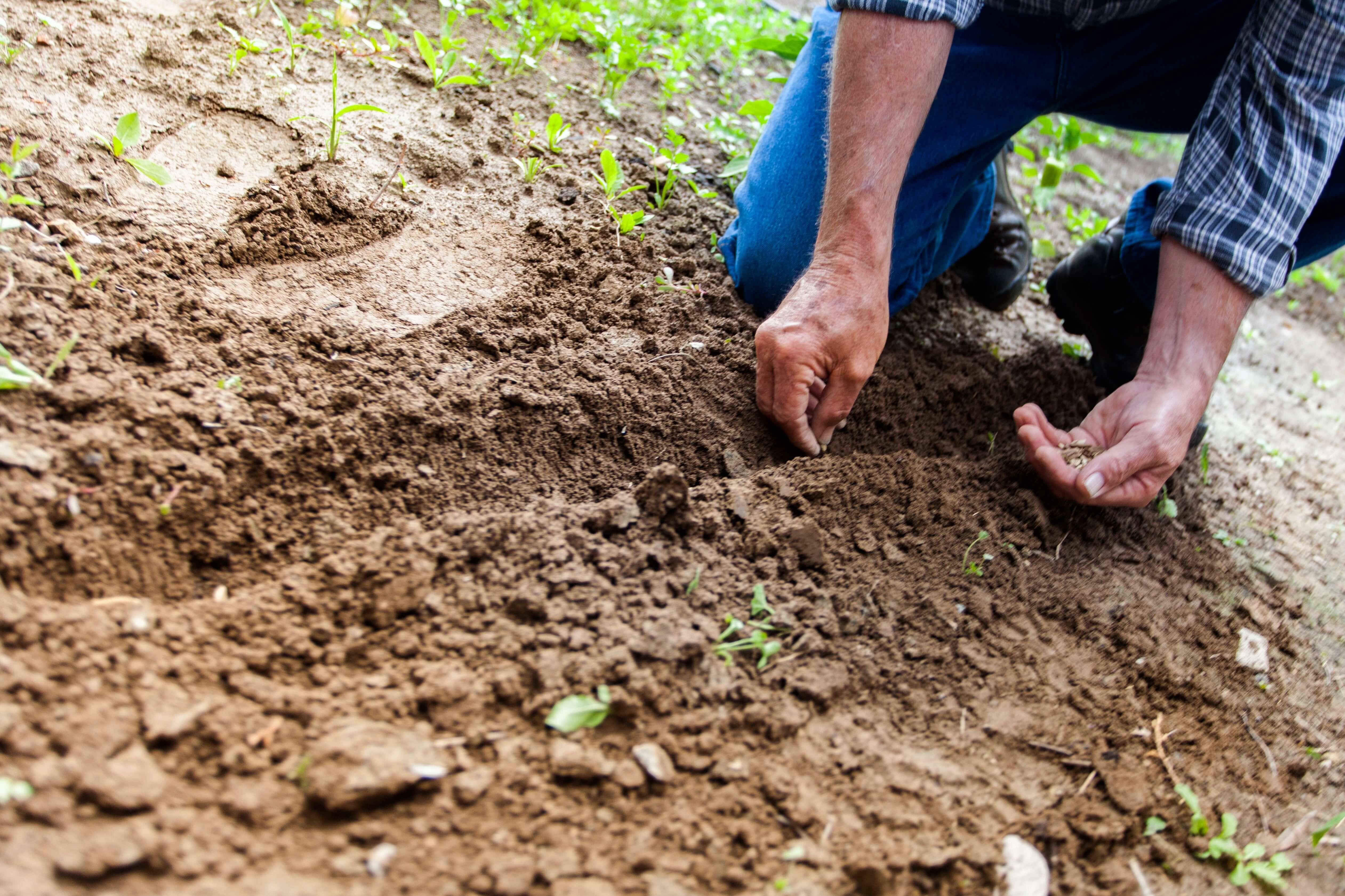 biodiversidad agraria